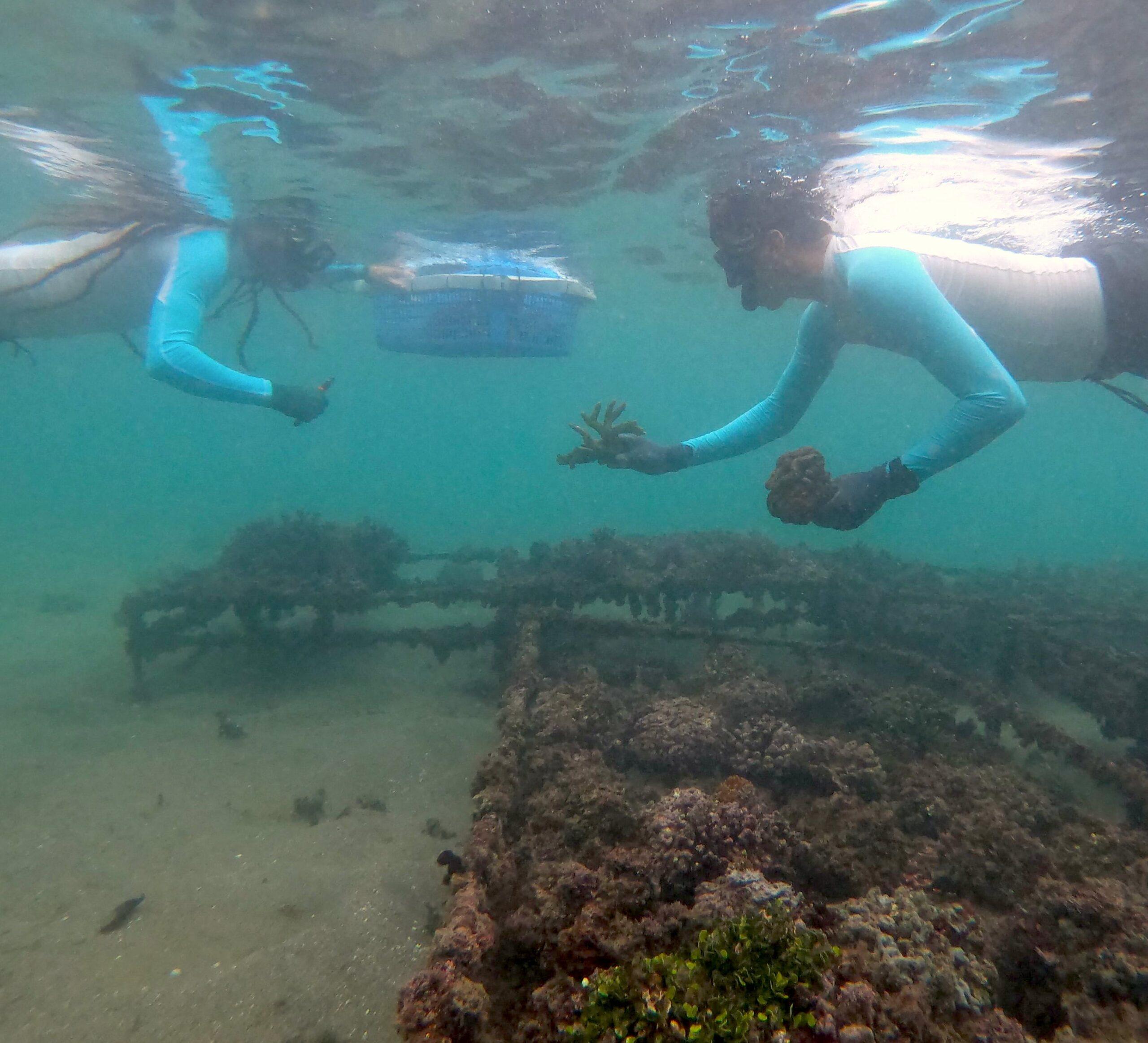 biologos cultivo coral